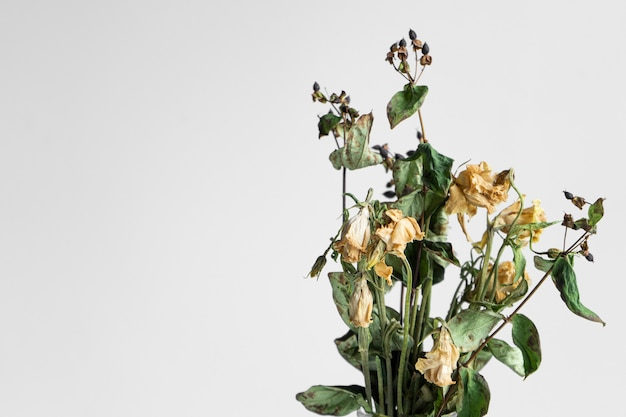 白のしおれた花の花束