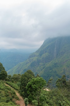 Горный пейзаж, зеленые склоны. красота гор. маленькая вершина адама, гора в тумане, вид из джунглей