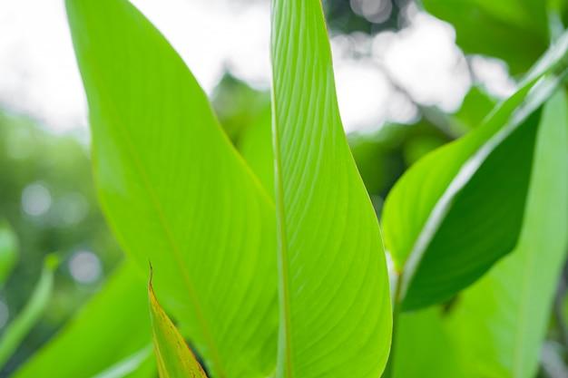 Насыщенный зеленый лист тропического растения