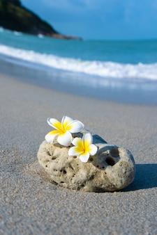 Небольшой камень интересной гладкой формы омывается волнами на пляже. спокойствие и отдых у моря