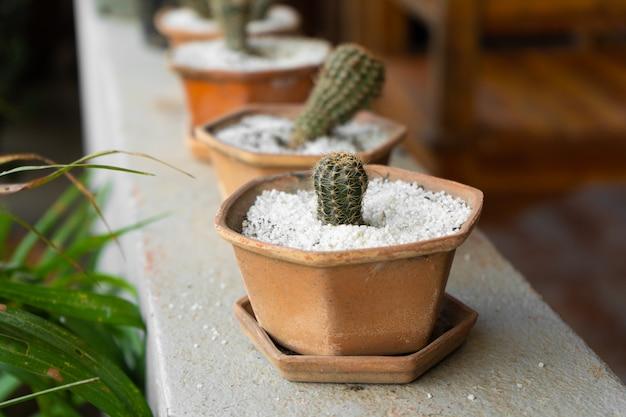 Маленькие декоративные горшки с кактусами
