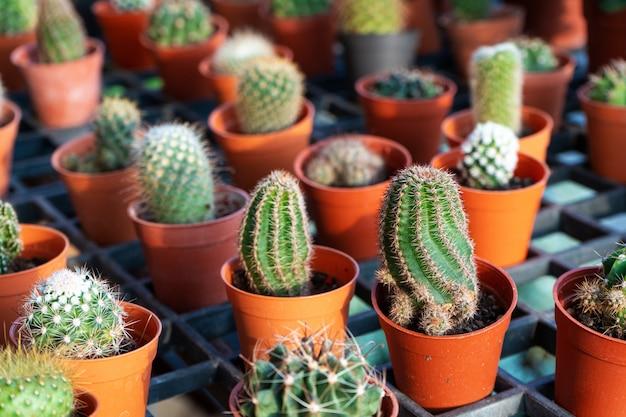 Маленькие декоративные горшки с цветами кактусов