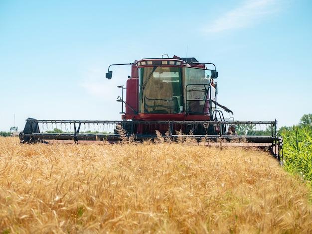 夏の小麦の収穫。フィールドで働く赤い収穫機。黄金の熟した小麦は、フィールドの農業機械ハーベスターを収穫します。