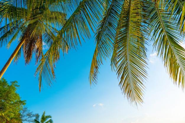 Пальмовая роща. пальмы в тропических джунглях. символ тропиков и тепла