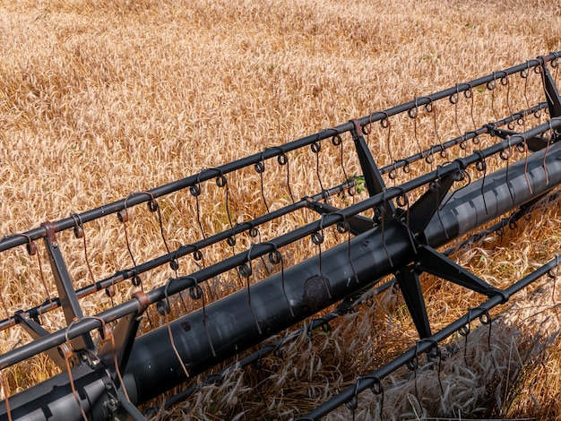 Уборка пшеницы летом. красный комбайн работает в поле. золотой спелой пшеницы урожай сельскохозяйственной машины комбайн на поле.