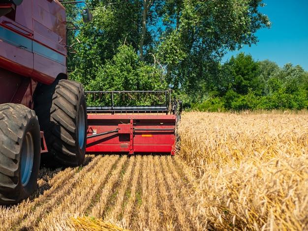 夏の小麦の収穫。フィールドで働く赤い収穫機。黄金の熟した小麦は、フィールド上の農業機械ハーベスターを収穫します。