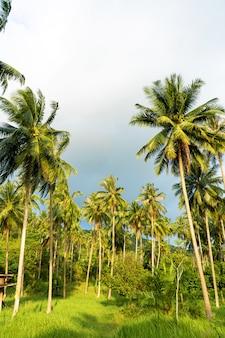 Пальмовая роща. пальмы в тропических джунглях.