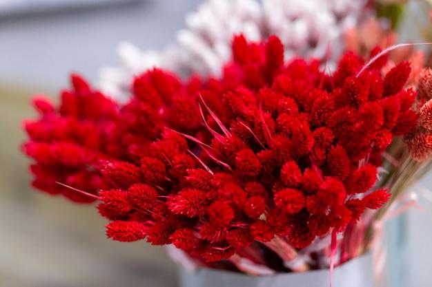 装飾的な先端のとがった花の花束。白地に赤いヤグルマギク