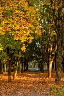 Красивый осенний парк. живописная природа, золотые деревья в лучах солнца.