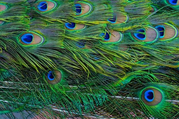 孔雀の尻尾の拡大図。孔雀の尾の羽。自然の色
