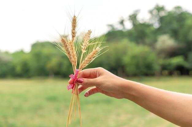 Женщина держит ухо пшеницы в руках на зеленой лужайке
