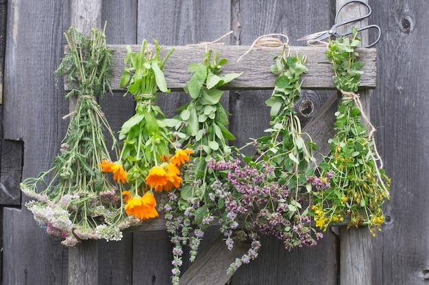 Лекарственные травы висят на лестнице и сушат