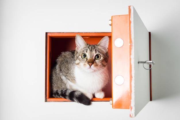 ストロングボックス内の甘い猫
