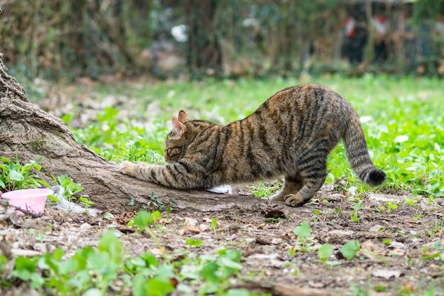 Кот бежит когтями по стволу