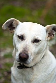 屋外の白い犬