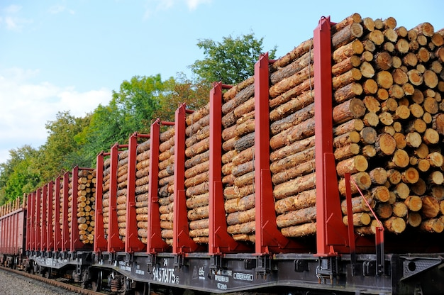 Грузовой поезд загружен сосновыми стволами