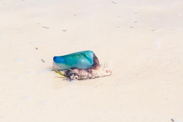Карибская желе рыба