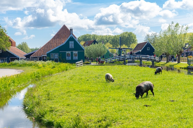ザーンセスカンスオランダのザーンダム周辺