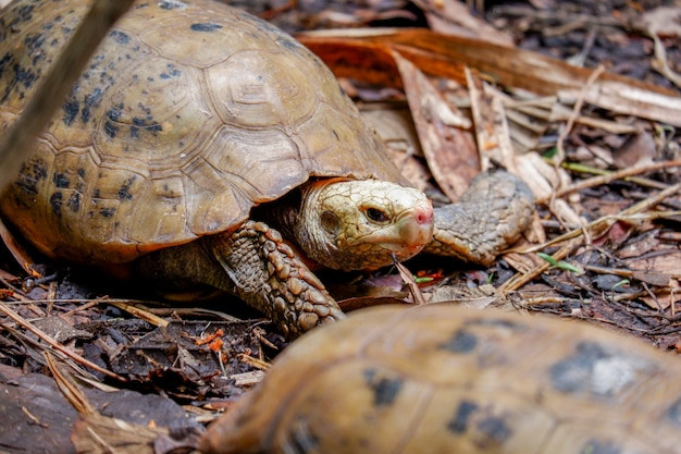 Милый черепаховый питомец в зоопарке животных