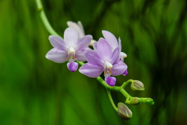 紫色の蘭の花