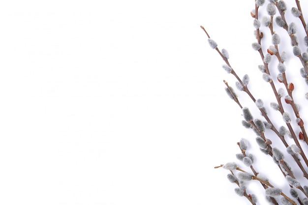 コピースペース、イースターと白い背景で隔離の柳尾状花序