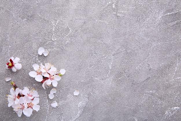 Ветви весны зацветая на серой конкретной предпосылке.