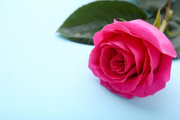 Одинокая красивая розовая роза