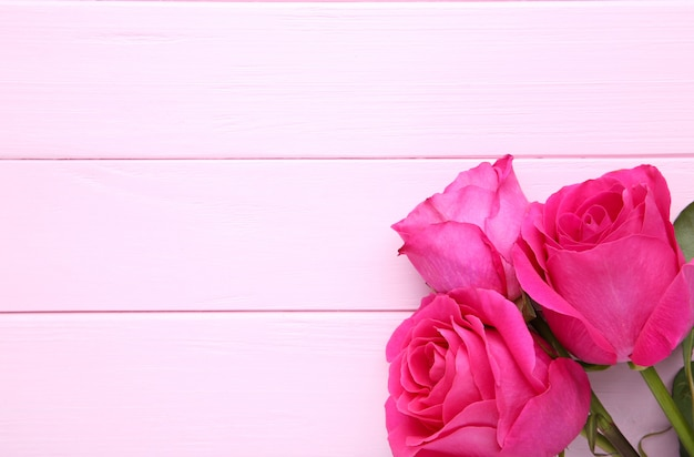 Три красивые розовые розы на розовом фоне
