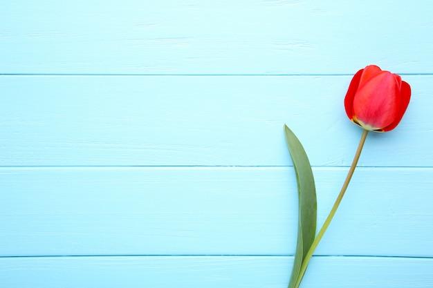 春の花青に赤いチューリップの花束。