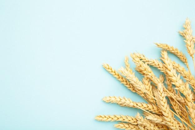 青色の背景に小麦の穂。トップビュー