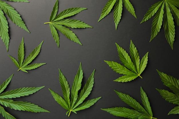 Листья конопли, листья марихуаны на черном фоне