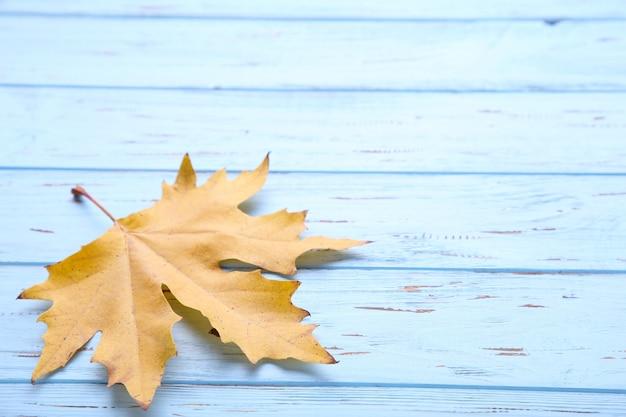 Оранжевые осенние листья на синем столе