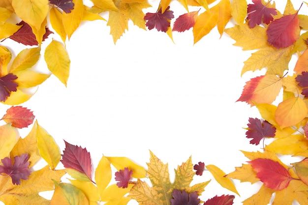 Красные и оранжевые осенние листья на белом