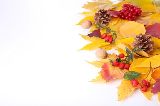 Осенние листья с ягодами, изолированные на белом