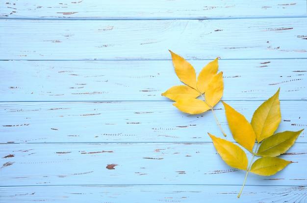 Оранжевые осенние листья на синем столе. день благодарения
