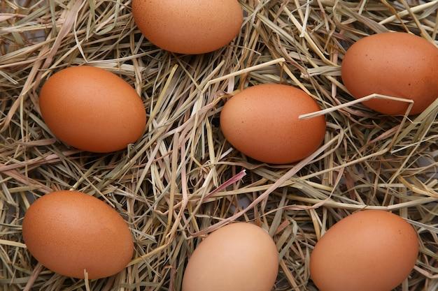 Свежие куриные яйца на фоне сена