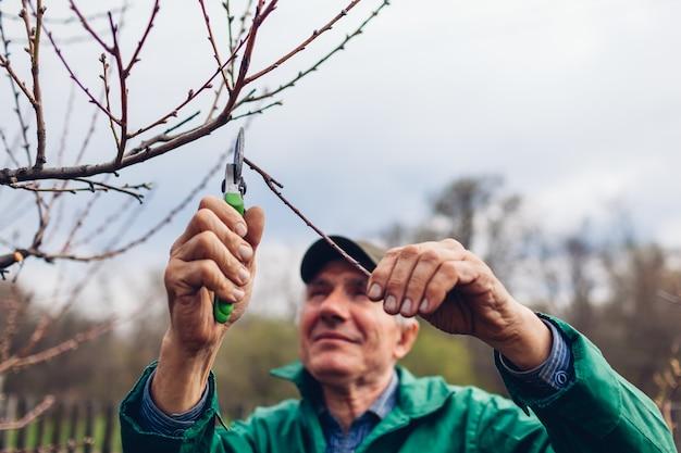 バリカンを持つ男剪定ツリー。男性農家は剪定ばさみまたは剪定ばさみで秋の庭の枝を切る