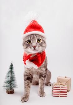 灰色のトラ猫はサンタの帽子をかぶっていて、白い背景のプレゼントに囲まれています。