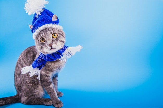 Серый полосатый кот носит шляпу и шарф санта-клауса на синем фоне.