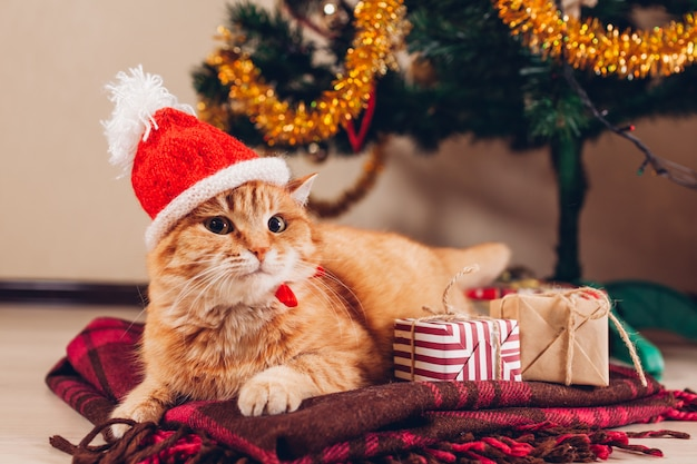 Рыжий кот носит шляпу санта-клауса под елку. рождество и новый год концепция