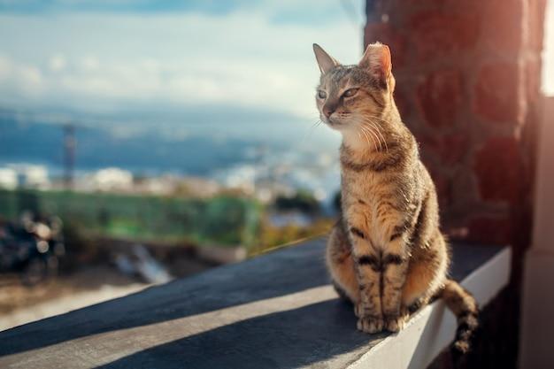 Бездомный кот сидит на террасе отеля на открытом воздухе на острове санторини.