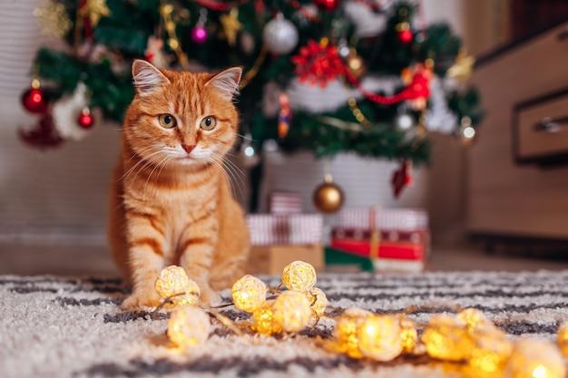 Рыжий кот играет с гирляндой под елкой