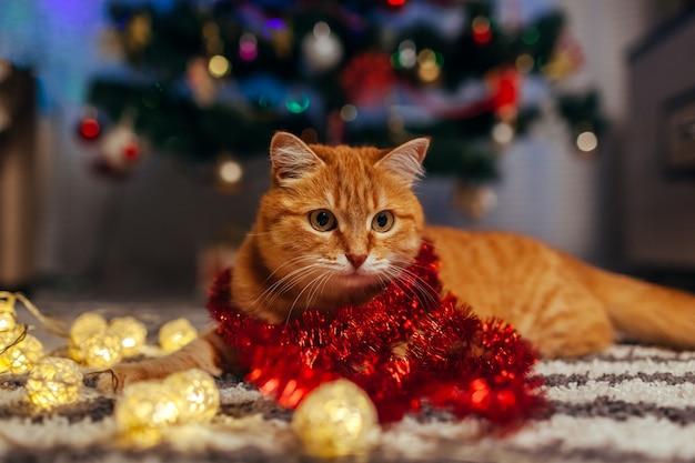 Рыжий кот играет с гирляндой под елкой. рождество и новый год концепция