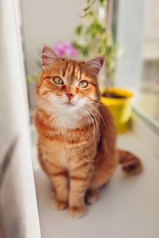 Рыжий кот сидит на подоконнике у себя дома в первой половине дня. животное наслаждается солнцем.