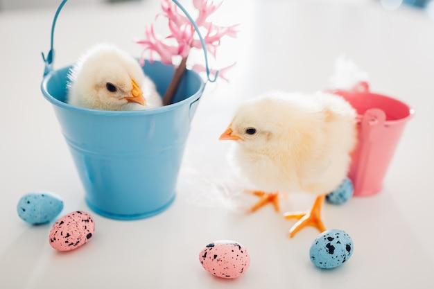 Маленькие желтые птенцы сидят в ведре, еще гуляют среди цветов и пасхальных яиц