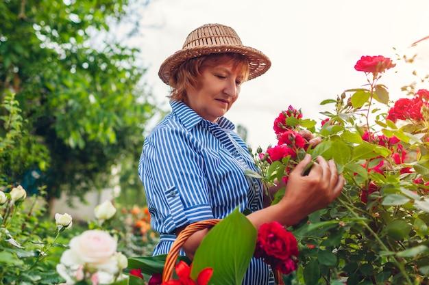 年配の女性が庭の花をチェックします。バラの茂みを眺める中年女性。ガーデニングのコンセプト