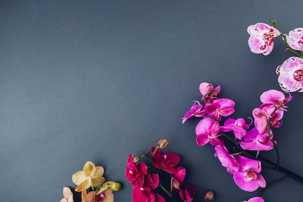 美しいカラフルな蘭の花。ピンクバーガンディイエローバイオレット咲く家の植物。園芸