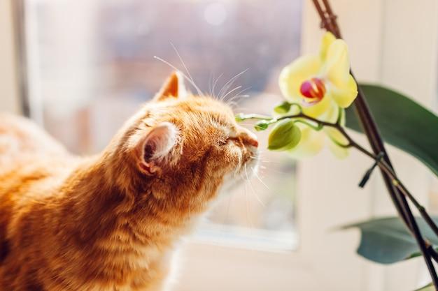 生姜猫が家の窓枠の上を歩いて