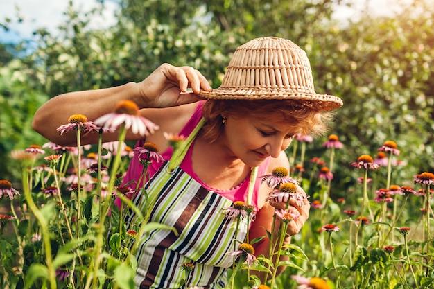 Старшая женщина собирая цветки в саде. женщина средних лет с запахом эхинацеи или эхинацеи.