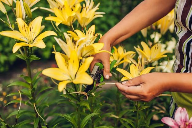 年配の女性が庭で花を収集します。